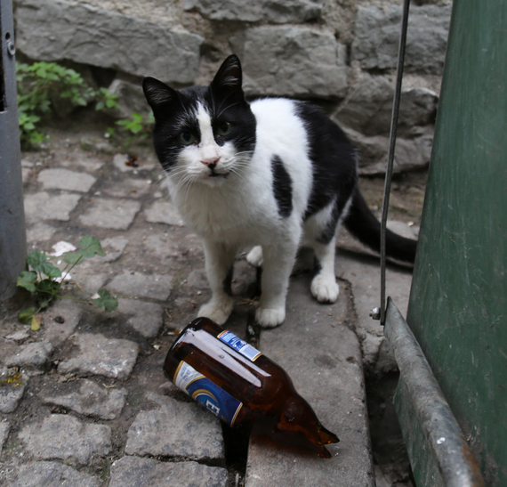2014-12-08-Cat15.jpg