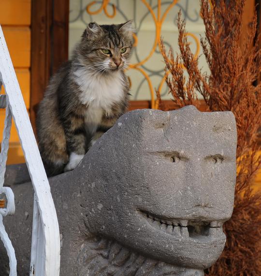 2014-12-08-Cat2.jpg