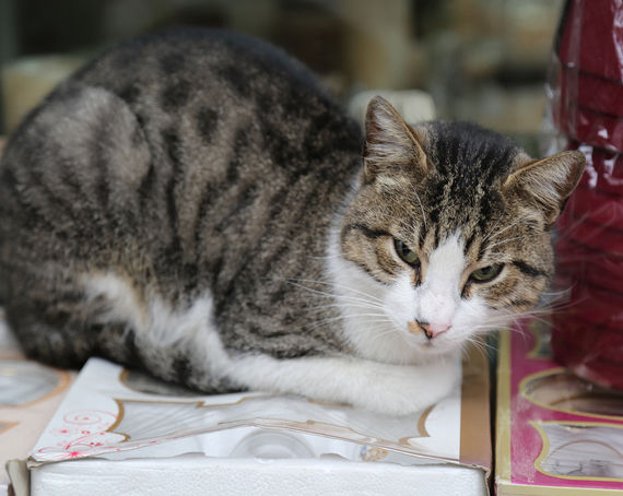 2014-12-08-Cat22.jpg