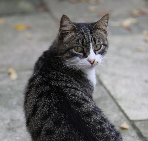 2014-12-08-Cat23.jpg