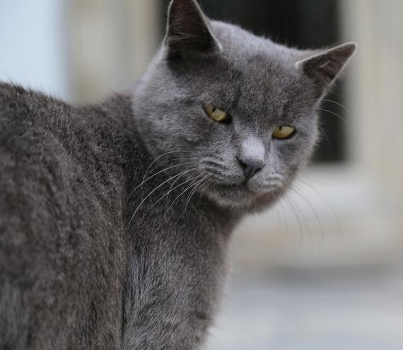2014-12-08-Cat27.jpg