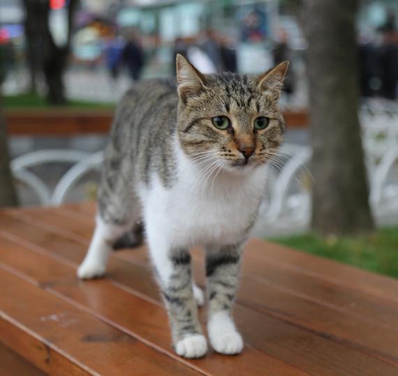 2014-12-08-Cat32.jpg
