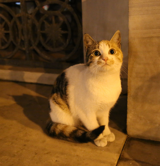 2014-12-08-Cat38.jpg