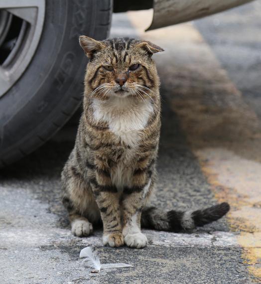 2014-12-08-Cat44.jpg
