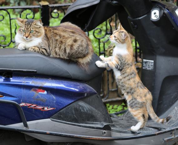 2014-12-08-Cat6.jpg