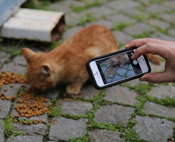2014-12-08-Cat8.jpg