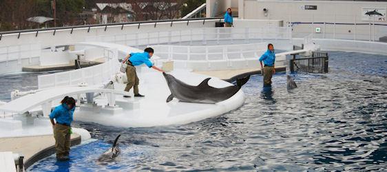 2014-12-09-DolphinariumsJapan.jpg