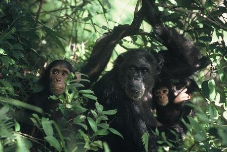 2014-12-11-GombeNP_Tanzania_Greengrass.jpg