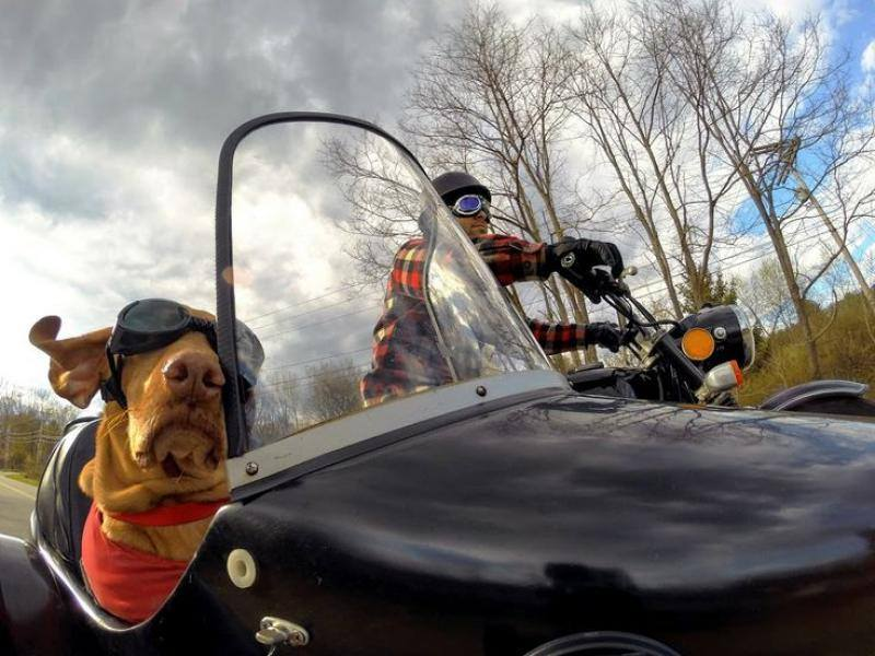 This Video of Dogs Riding in Motorcycle Side-cars Is the