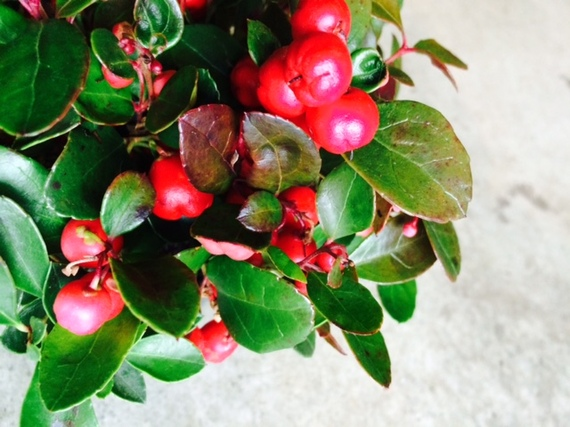 2014-12-12-winterberry.jpg