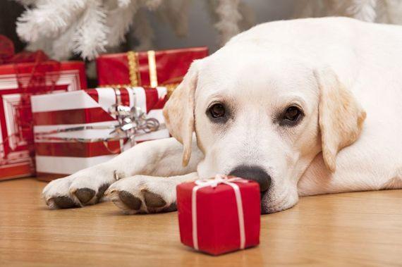 2014-12-14-puppy_1.JPG