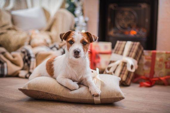 2014-12-14-puppy_2.JPG