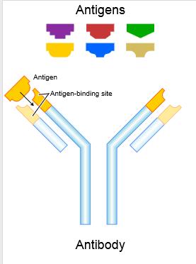2014-12-15-Antibody.png