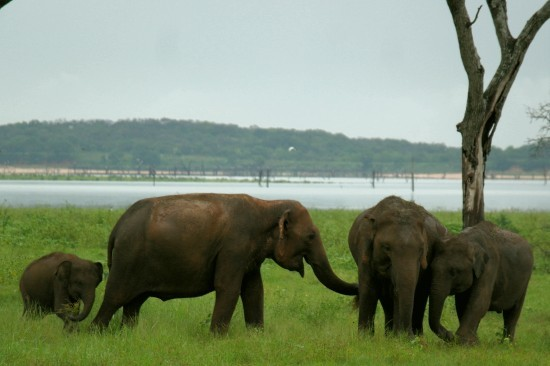 2014-12-16-elephants.JPG