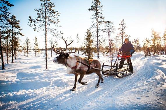 2014-12-16-reindeer_lapland.jpg