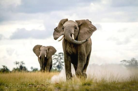 War on Poaching: Saving the Wild Quotes of 2014