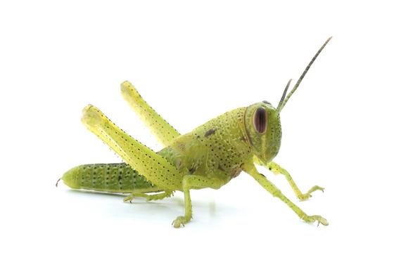 2014-12-17-grasshopper_01_sm.jpg