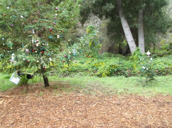 2014-12-19-2Trees.JPG