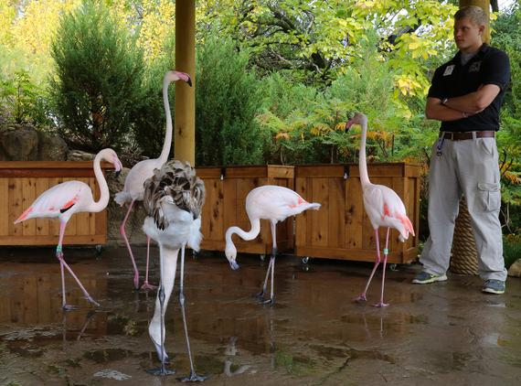2014-12-22-Flamingos.jpg