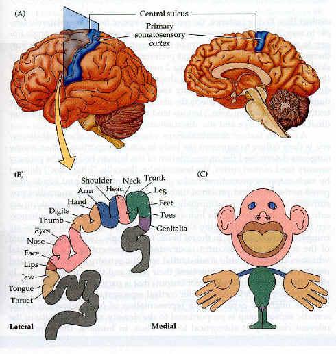 2014-12-26-somatosensory.jpg