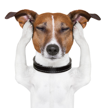 2014-12-27-dogfocusing2.jpg