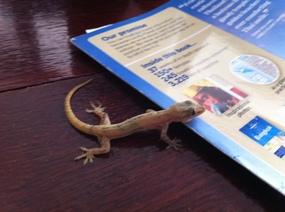 2014-12-30-lizard2.jpg