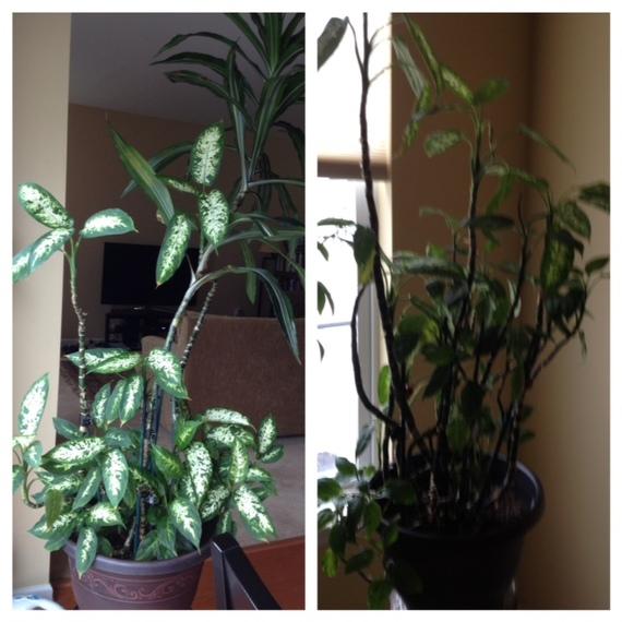 2014-12-30-plants.jpg