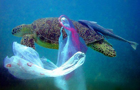 2015-01-01-PlasticBagsEarthDrReeseHalter
