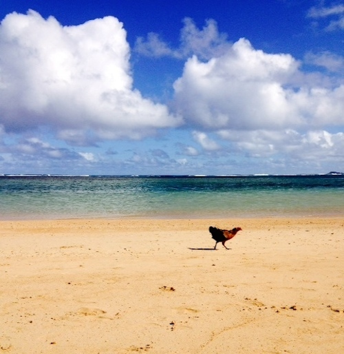 2015-01-02-chickenonbeach.jpeg