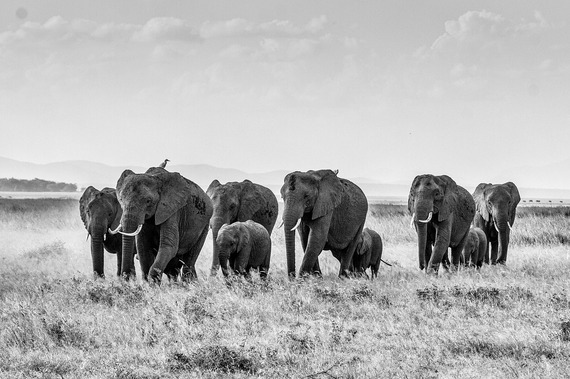 2015-01-05-africanbushelephant283867_1280.jpg