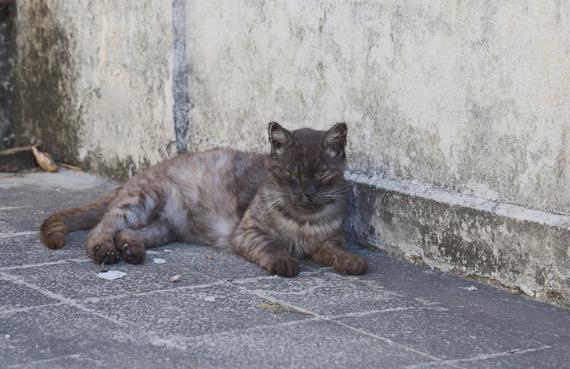 2015-01-08-Cat23.jpg