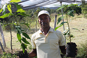 2015-01-08-mangoessmall.jpg