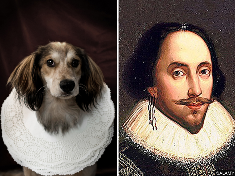 shakespeare use of animal imagery in Get an answer for 'how does shakespeare use animal imagery to trace the downfall of macbeth' and find homework help for other macbeth questions at enotes.