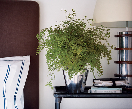 Images Unexpected Ways to Decorate with Ferns 4 interior design ideas