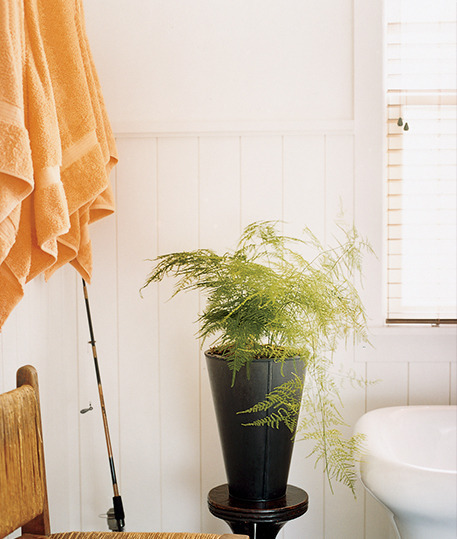 Images Unexpected Ways to Decorate with Ferns 3 home decorating