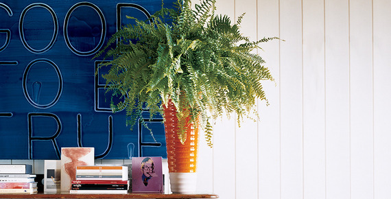 Images Unexpected Ways to Decorate with Ferns 1 Interior Design