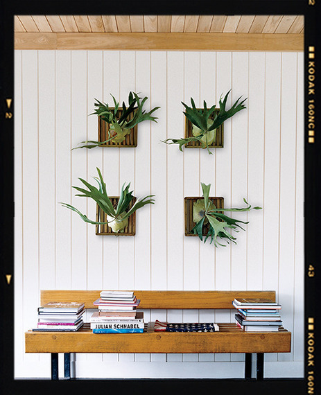 Images Unexpected Ways to Decorate with Ferns 5 Home Design