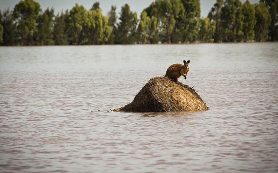 2015-01-14-ClimateDisruptionEpicFloodingAustraliaEarthDrReeseHalter