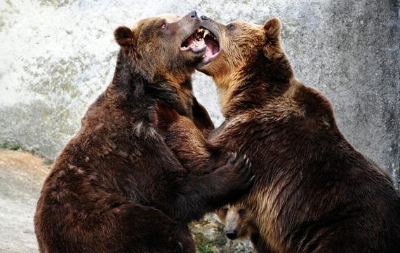 2015-01-16-bears.jpg