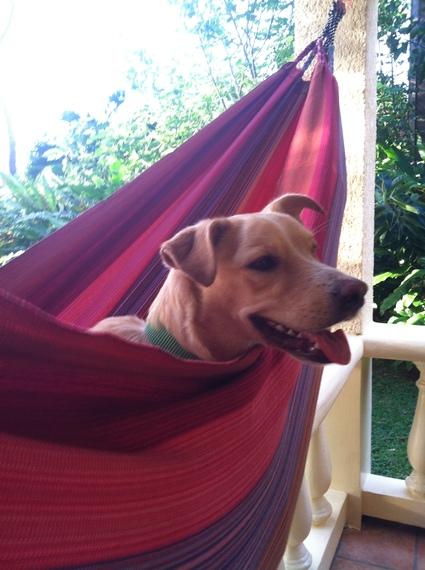 2015-01-20-StreetdogadoptedinRoatan.jpg