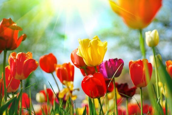 2015-01-20-springflowers.jpg