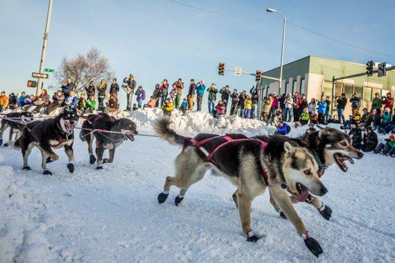 2015-01-21-Iditarod2014CeremonialStart04.jpg