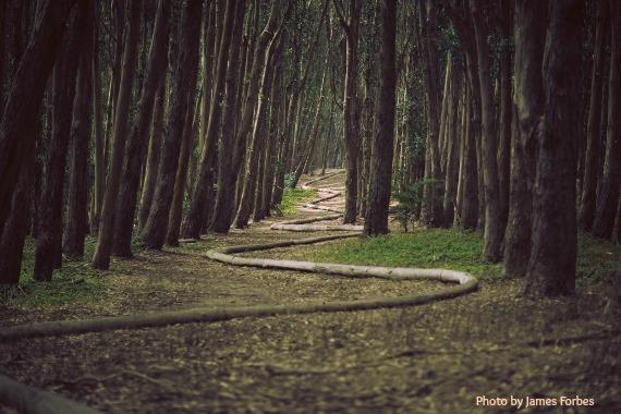 2015-01-21-woodssnakepathUnsplashJamesForbes570x380withname.jpg