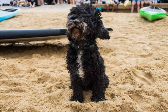 2015-01-28-12._sandy_nose_dog_beach_babe_watsons_bay__1422422785_99372.jpg