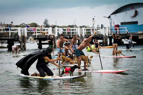 2015-01-28-13._stand_up_paddle_board_race_every_man_and_his_dog_watsons_bay_batman_robin_costume__1422422807_50838.jpg