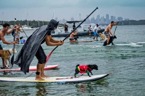 2015-01-28-14._every_man_and_his_dog_stand_up_paddle_board_race_sup_batman_costume_puppy__1422422840_56419.jpg
