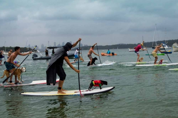 2015-01-28-15._man_and_dog_sup_race_watsons_bay_costume_puppy_owner_beach__1422422878_18527.jpg