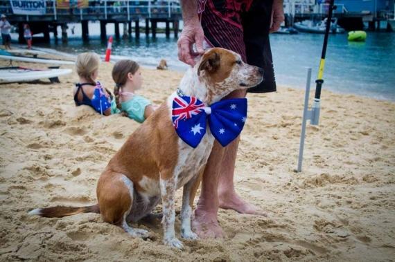 2015-01-28-8._patriotic_dog_watsons_bay_costume_paddle_board_race__1422422702_61049.jpg