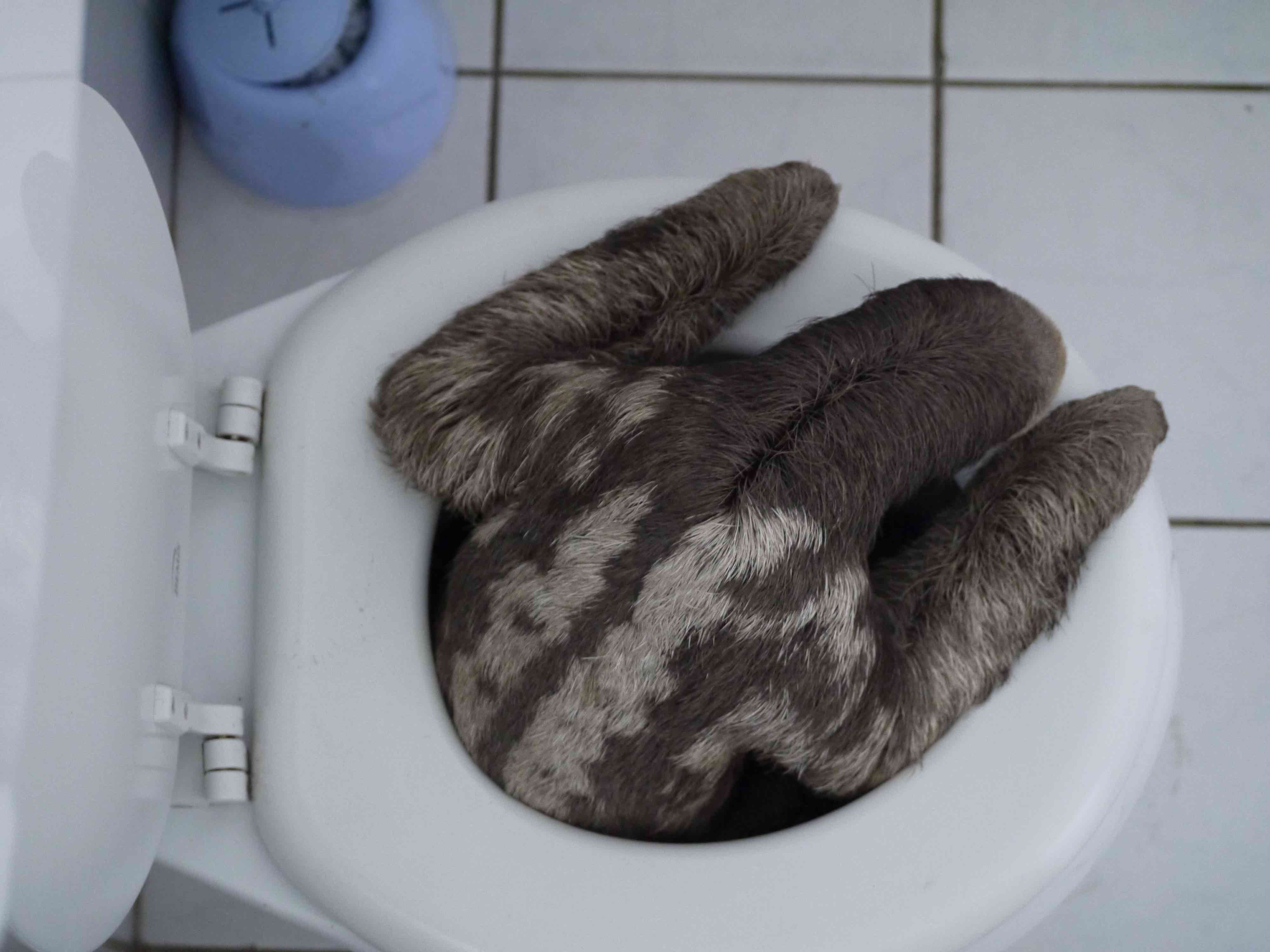 sloths but had never met one with such impeccable bathroom etiquette