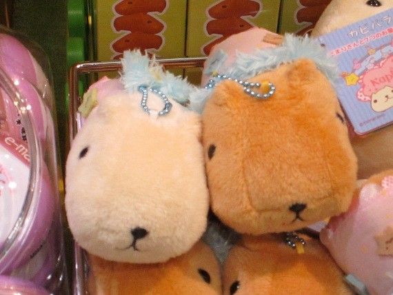 2015-01-31-capybaraboom.JPG